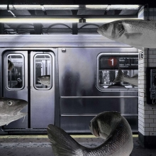subway-fishlr