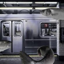subway-fishlr